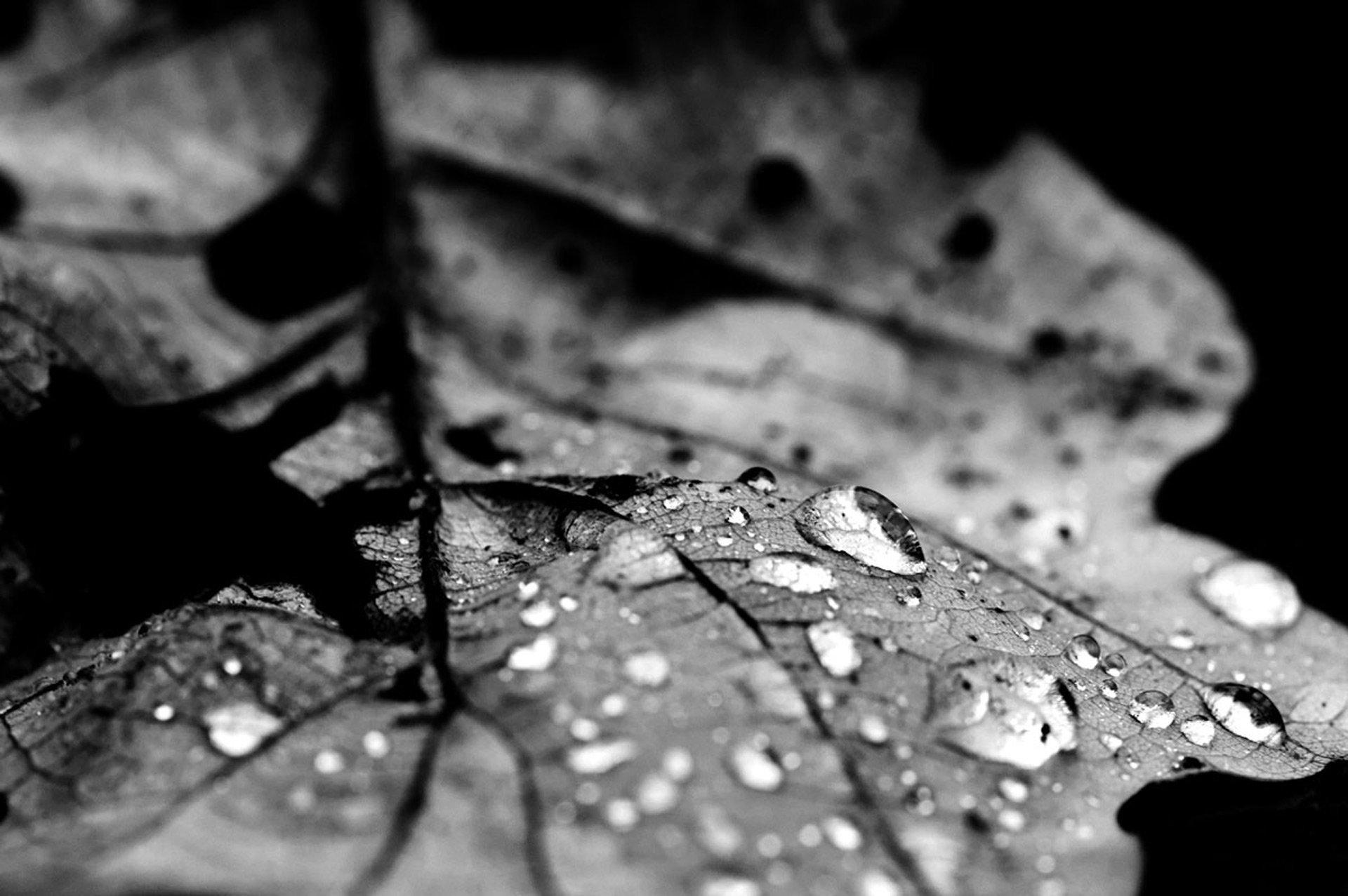 Jens Landmesser Makro im Botanischen Garten