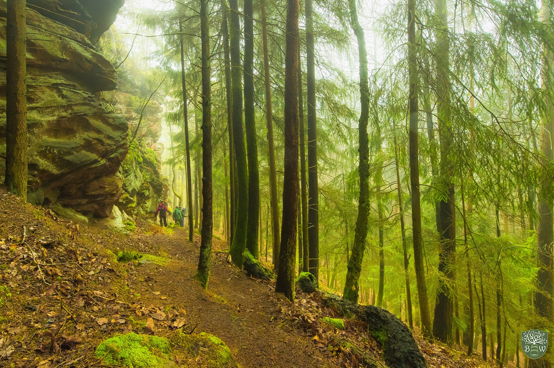 Bastian Werner Landschaftsfotografie im Pfälzer Wald