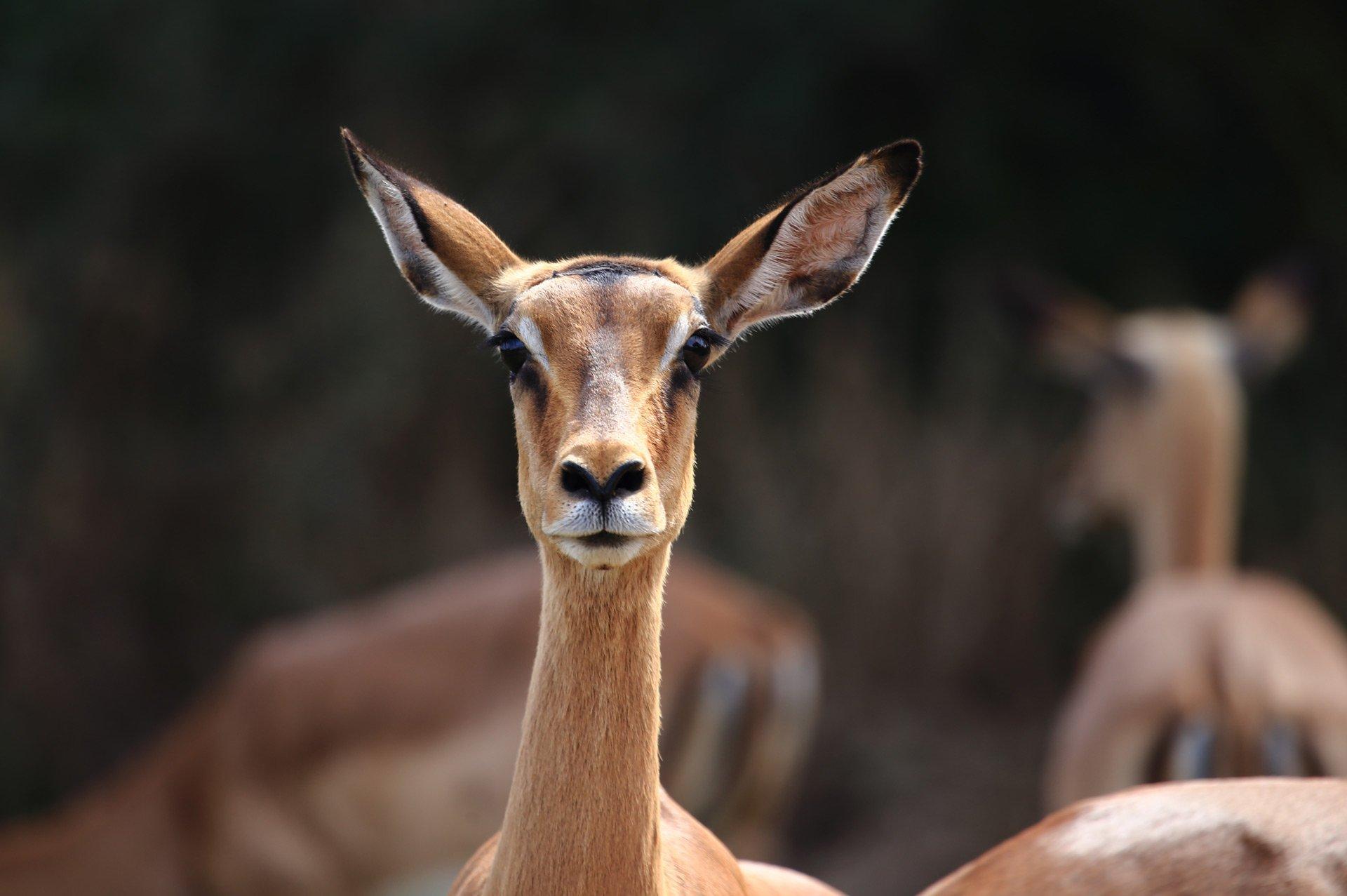 Jens Landmesser Tierfotografie im Opel-Zoo