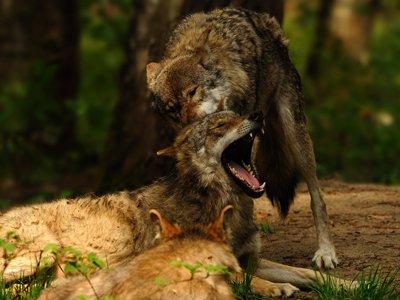 """Tierfotografie im Wildpark """"Alte Fasanerie"""""""