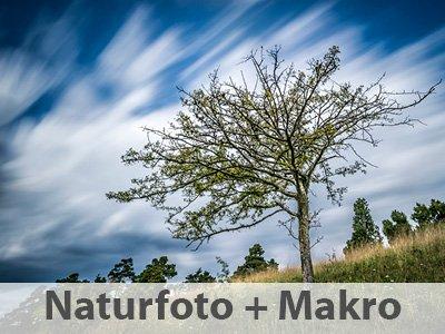 Naturfotografie und Makrofotografie fotogena Akademie