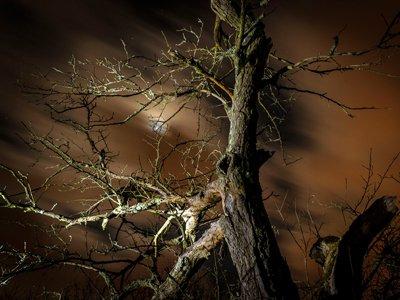 Fototage Frankenstein – Magisches Licht