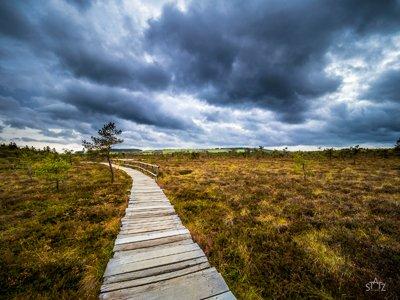 Ein Tag im Schwarzen Moor – Fotoexkursion