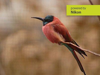 Online – Workshop Nikon für Einsteiger