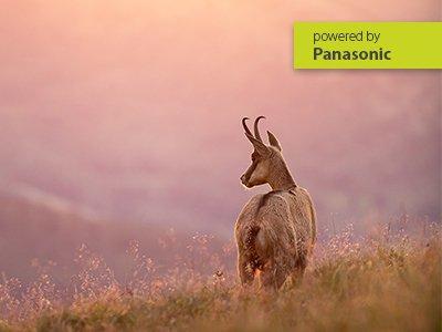 Webinar Panasonic | Abenteuer Naturfotografie
