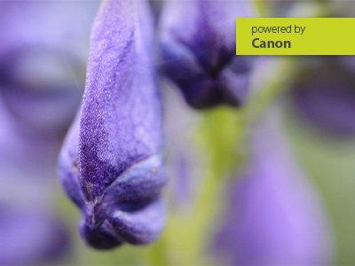 Online – Workshop Makrofotografie mit dem Canon-System