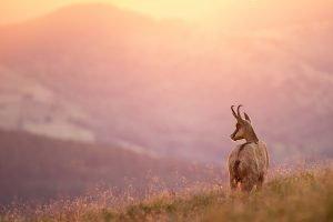 Webinar Abenteuer Naturfotografie